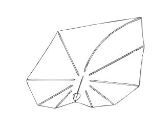 designer parasol
